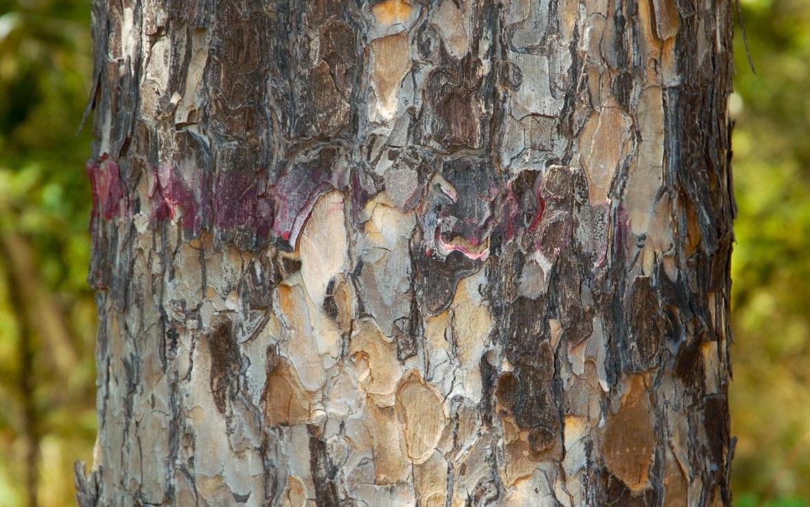 Tree bark_Homepage (1 of 1)